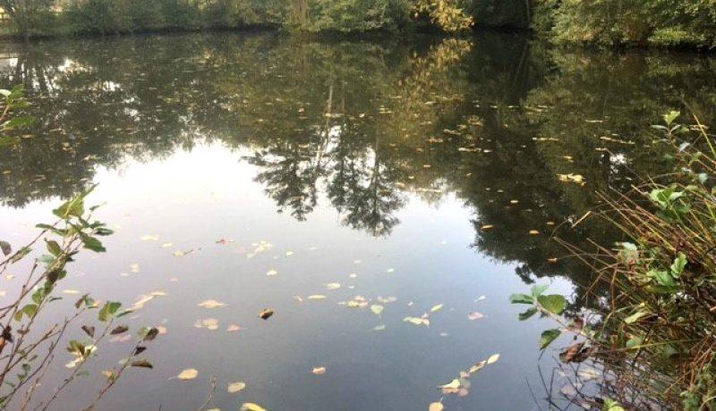 lily-lake-crow-green-fishery